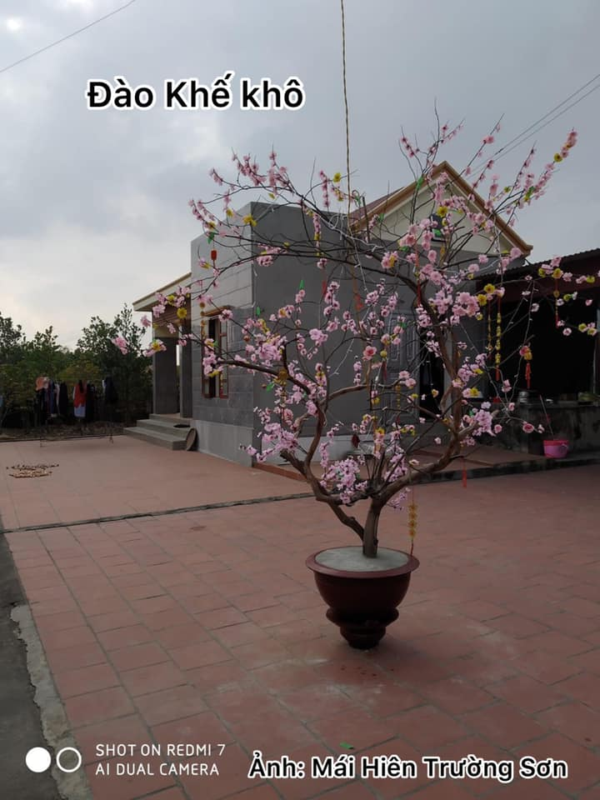 Loat cay canh choi Tet tan dung het nac khien CDM ne phuc-Hinh-6