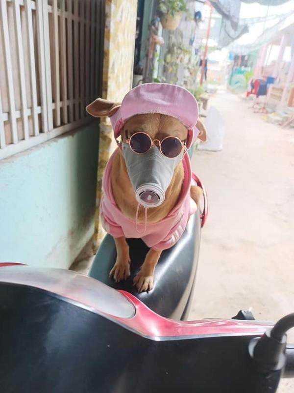 Khau trang cho thu cung mua dich, dan tinh nhin ma choang-Hinh-2