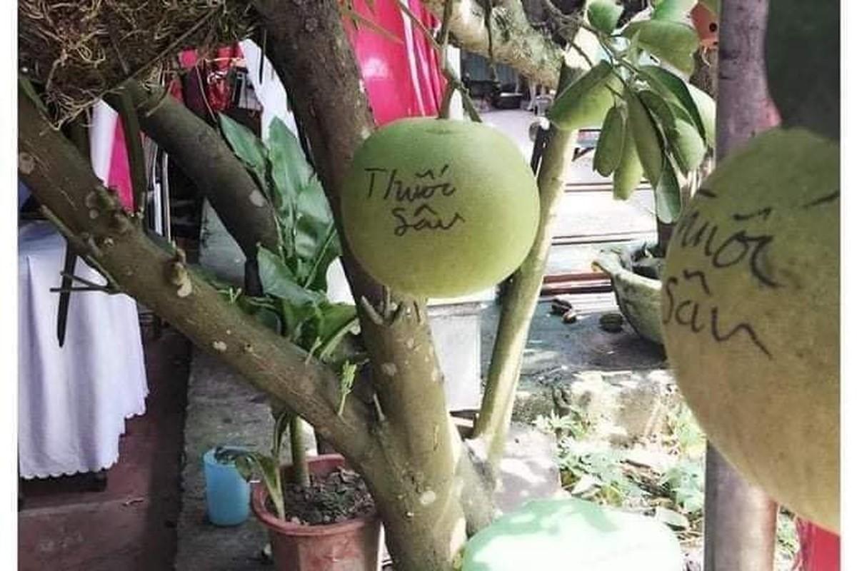 Loat canh bao chong trom rau cua chu vuon gay sot mang-Hinh-10