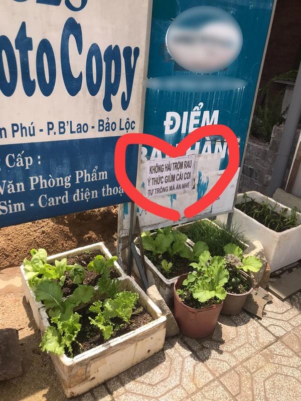 Loat canh bao chong trom rau cua chu vuon gay sot mang-Hinh-11