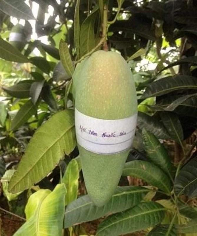 Loat canh bao chong trom rau cua chu vuon gay sot mang-Hinh-6
