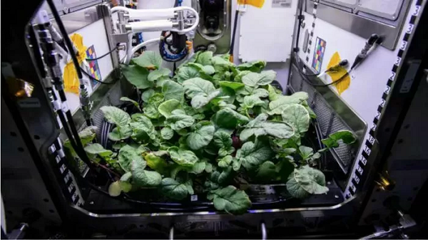 NASA trong thanh cong cu cai ngoai khong gian huong vi cuc ngon-Hinh-10