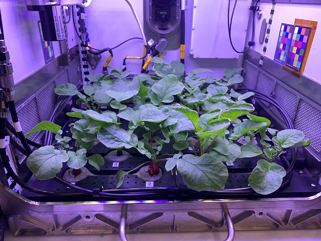 NASA trong thanh cong cu cai ngoai khong gian huong vi cuc ngon-Hinh-4