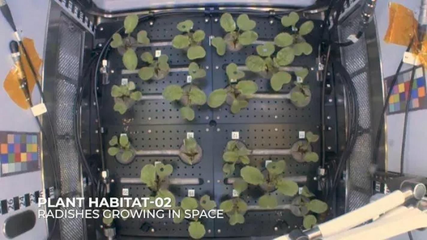NASA trong thanh cong cu cai ngoai khong gian huong vi cuc ngon-Hinh-6