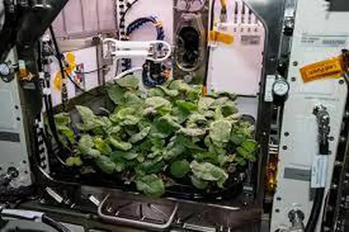 NASA trong thanh cong cu cai ngoai khong gian huong vi cuc ngon-Hinh-9