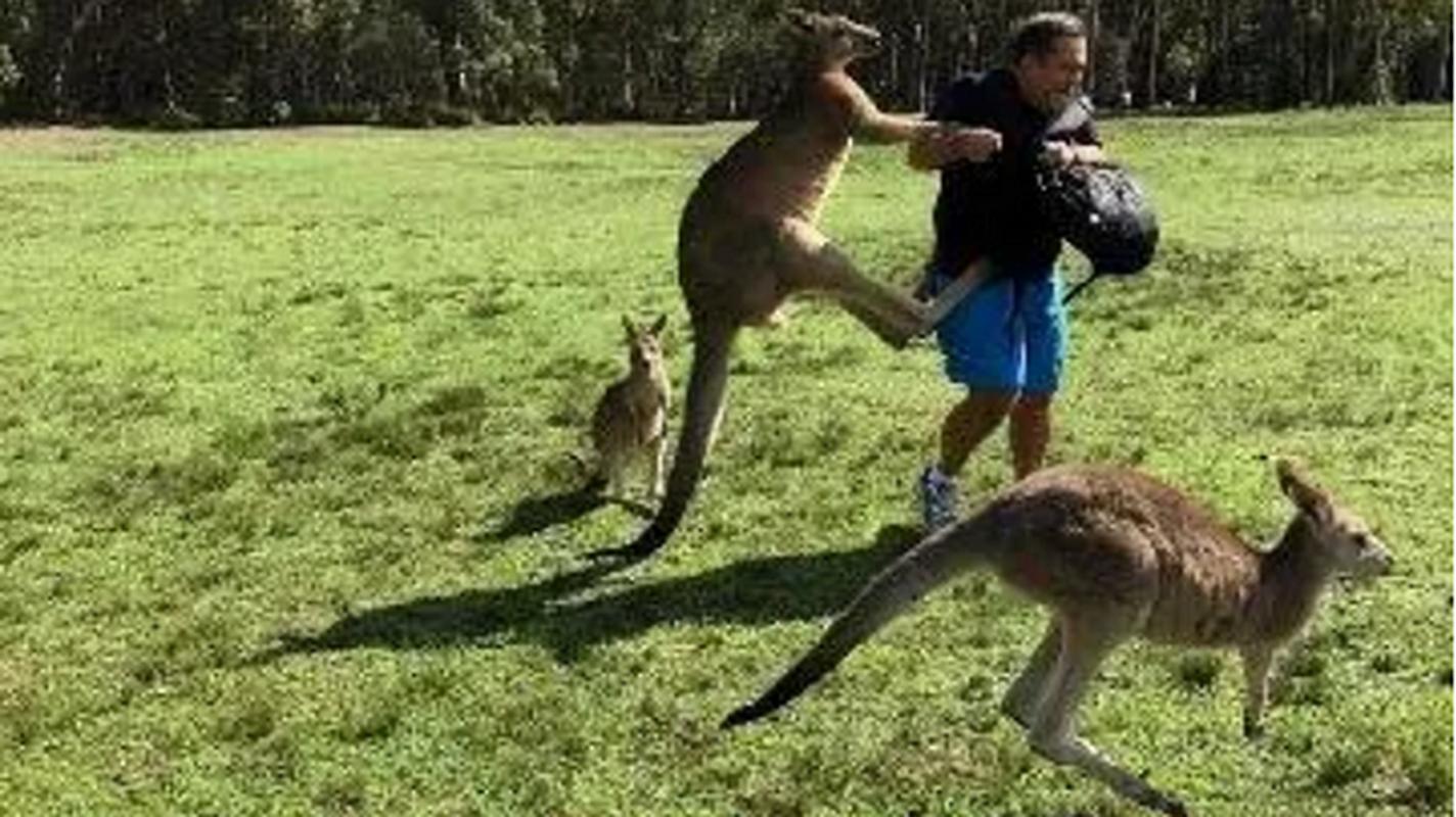 Uc: Chay rung khien Kangaroo tan cong, cuop do an cua nguoi dan-Hinh-11