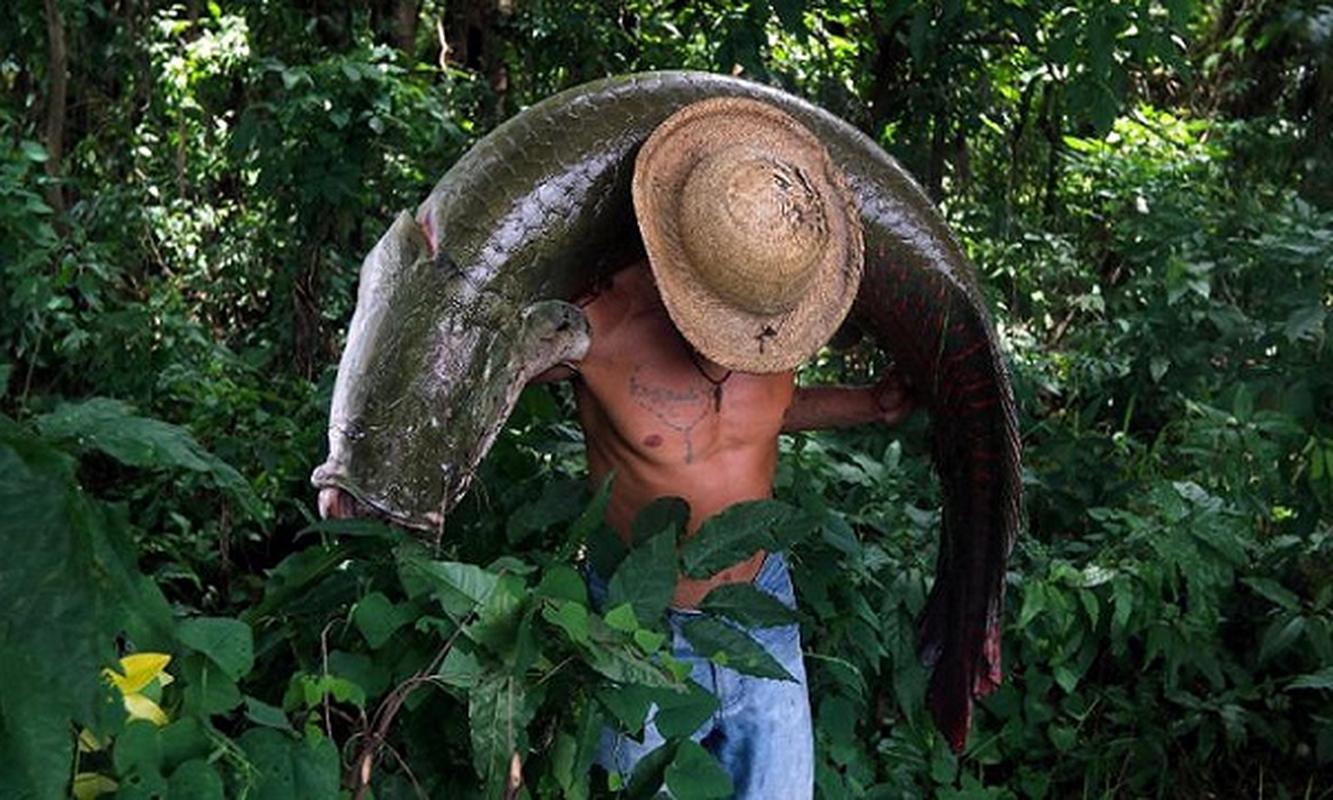 Hoang mang quai vat song Amazon bong dung chet ky la o My-Hinh-6