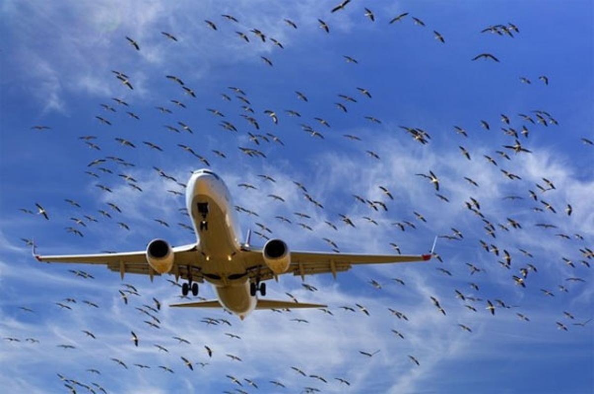 Noi kinh hoang cua phi cong may bay khi va cham voi chim troi-Hinh-12