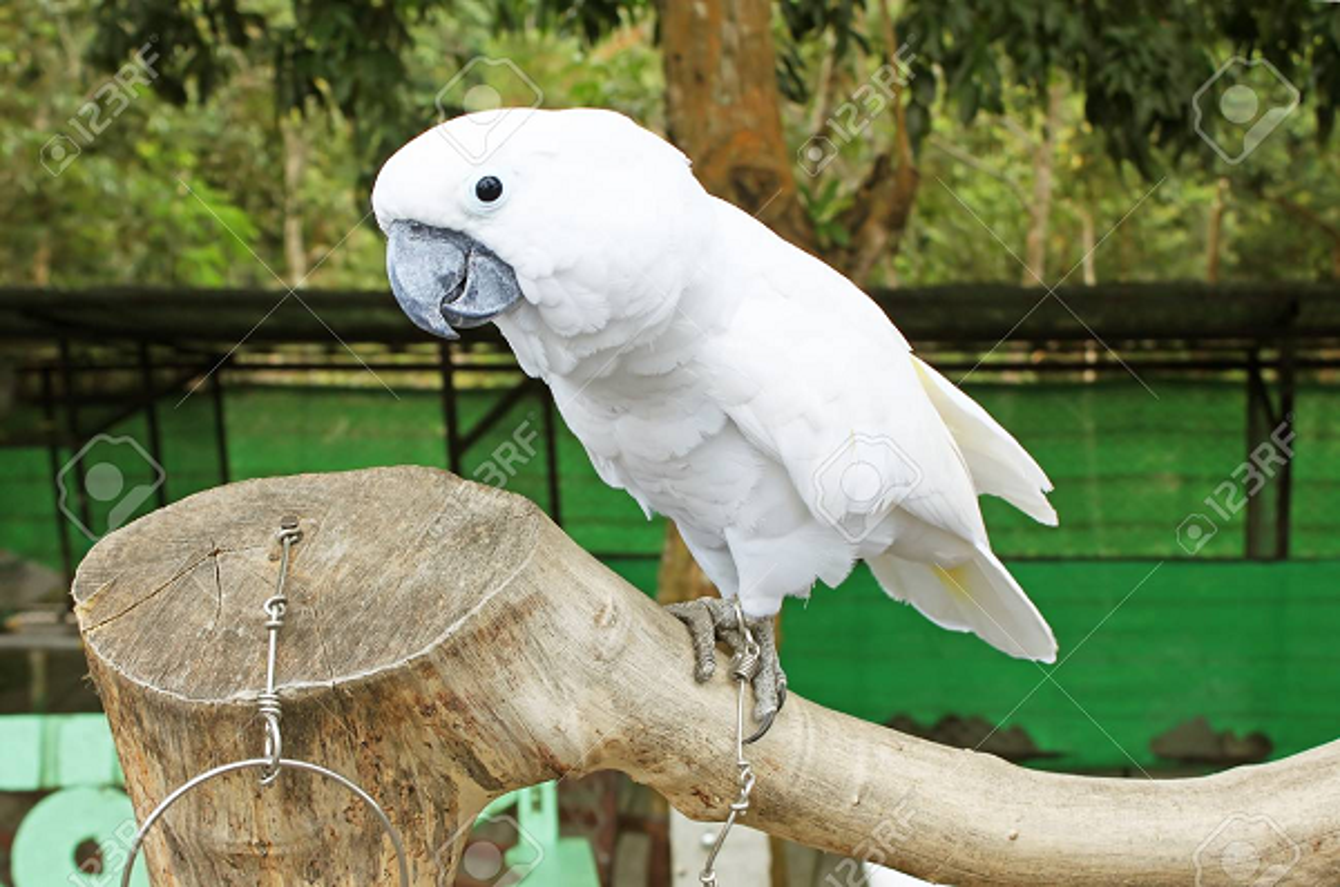 Kinh hai canh hang nghin con vet trang xam chiem thi tran Australia-Hinh-10