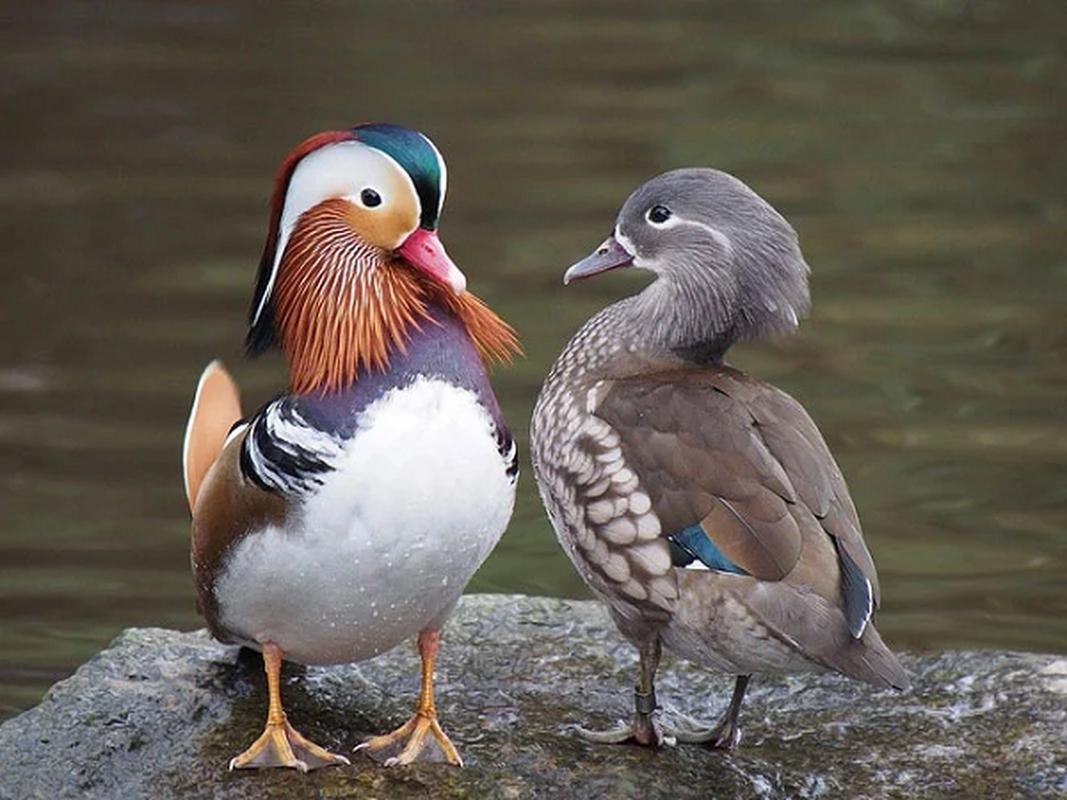 Soc toan tap khi thay nhung loai chim hinh dang ky di nhat hanh tinh-Hinh-13