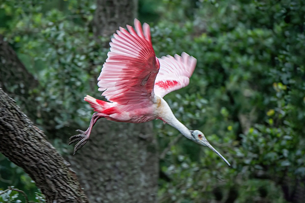 Soc toan tap khi thay nhung loai chim hinh dang ky di nhat hanh tinh-Hinh-4
