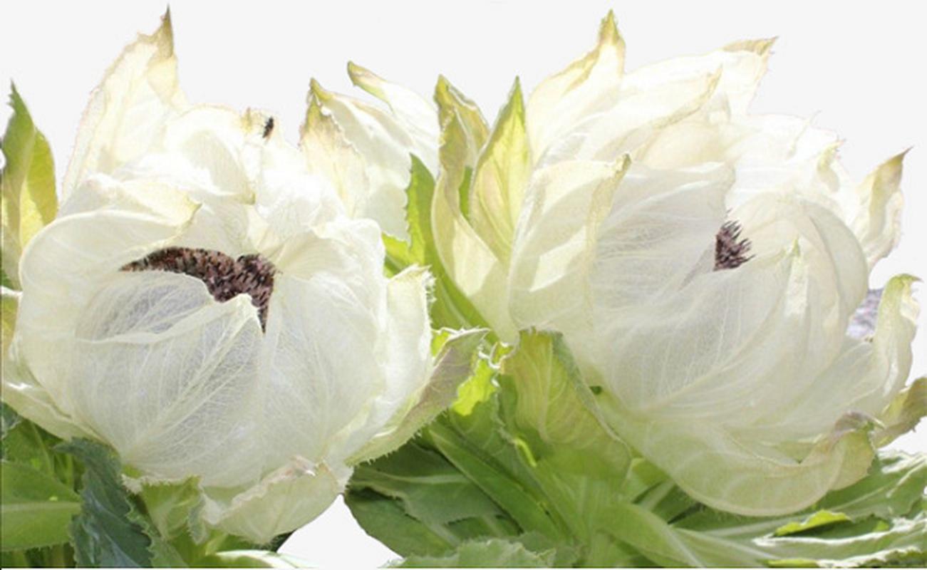 Loai hoa