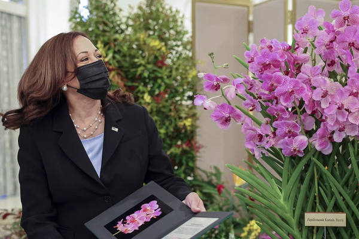 To mo hoa lan Papilionanda Kamala Harris mang ten nu Pho Tong thong My