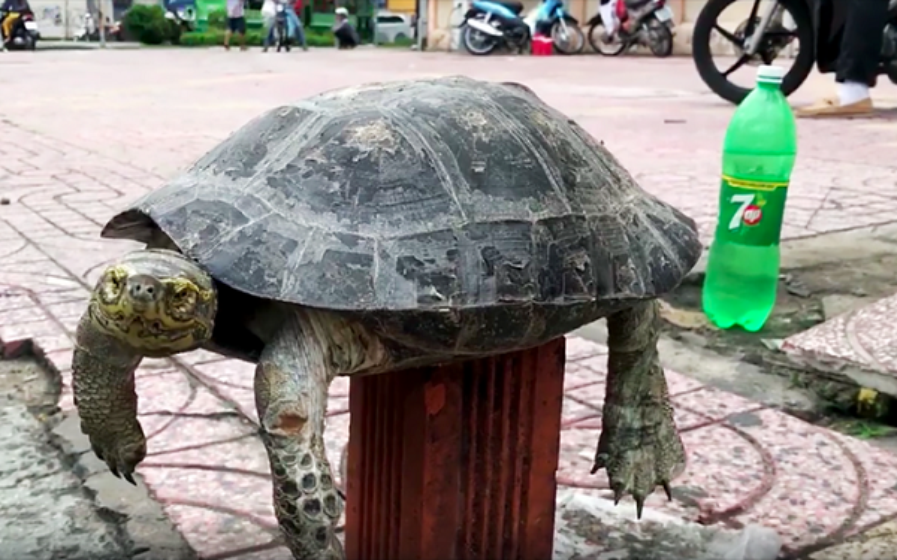 Ca the rua Rang duoc VQG Ha Tinh tiep nhan quy hiem co nao?-Hinh-5