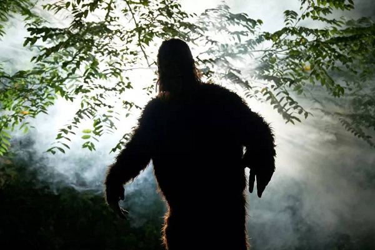 Bat qua tang khoanh khac quai vat Bigfoot xuat hien treu con nguoi-Hinh-4