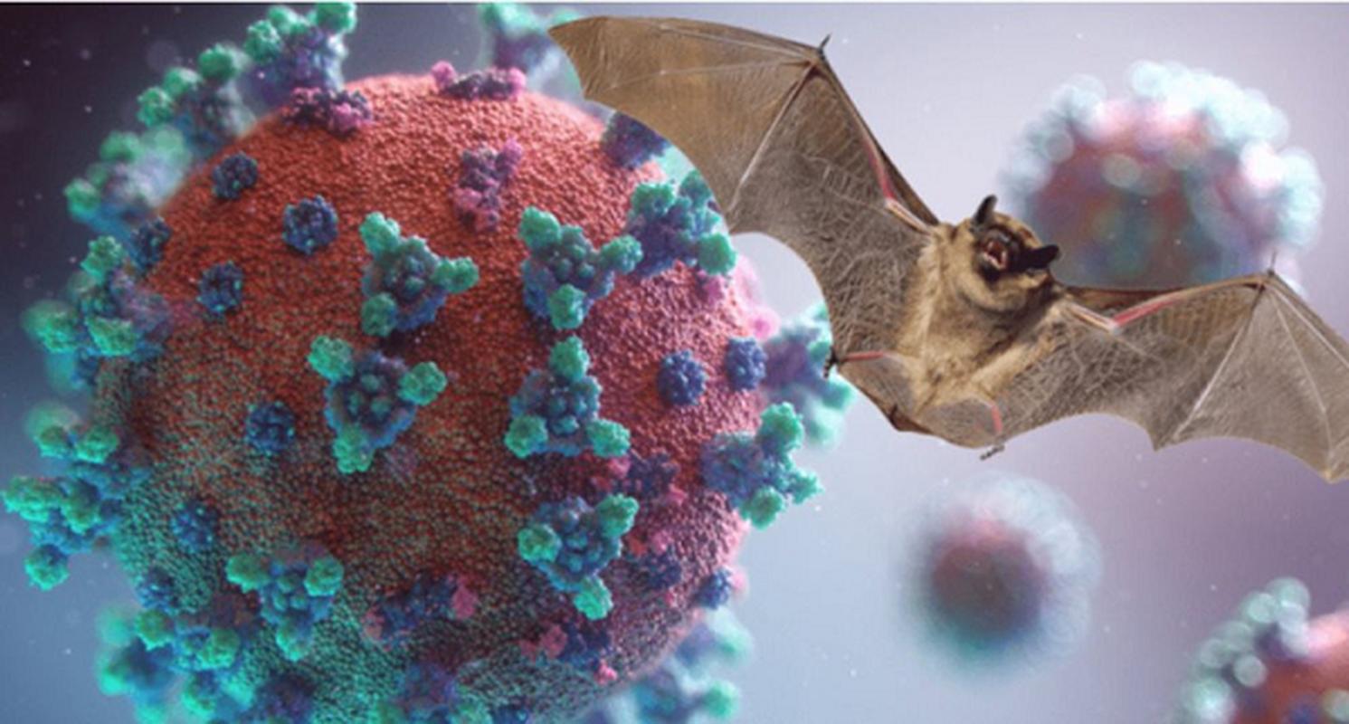 CDC Trung Quoc canh bao: Virus SARS-CoV-2 dang lan rong kho kiem soat!-Hinh-8