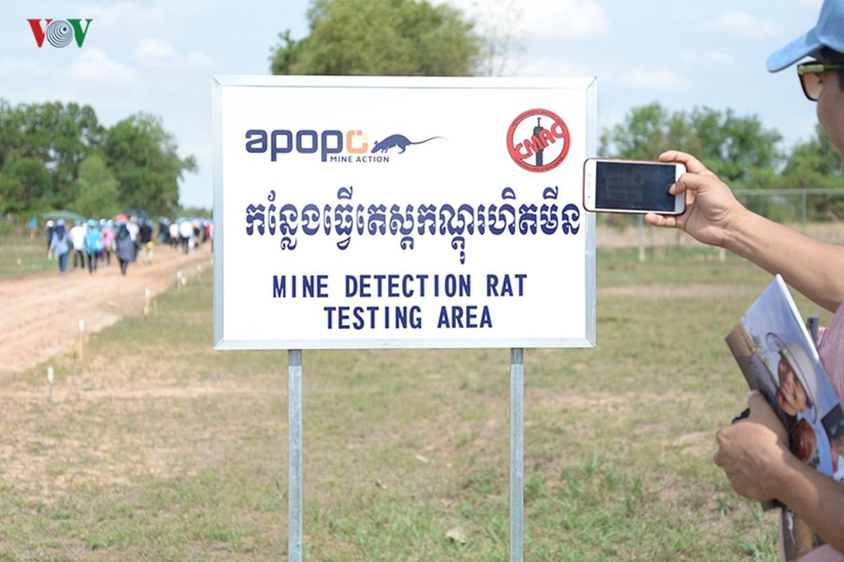 O nhiem bom min: Vet thuong kho co the lanh o Campuchia-Hinh-18