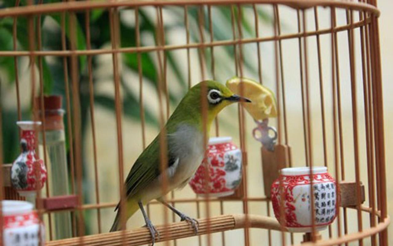 Nhung giong chim khien dai gia Viet khong ngai chi tien-Hinh-6