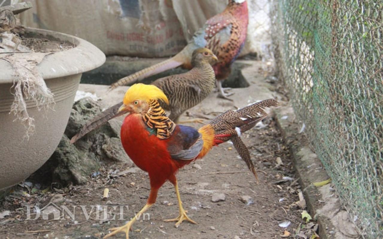 Nhung giong chim khien dai gia Viet khong ngai chi tien