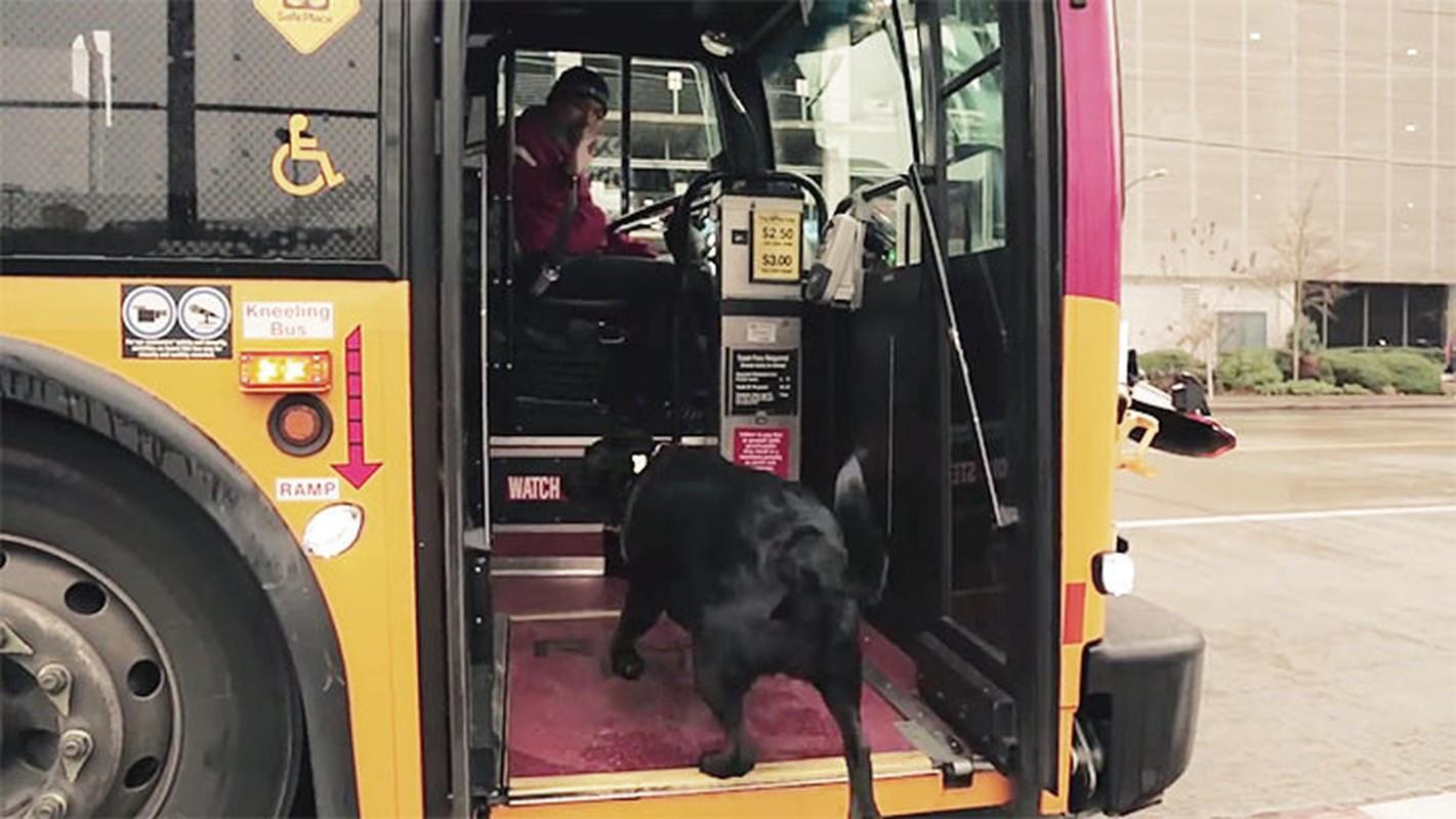Co cho hang ngay tu di xe bus ra cong vien choi-Hinh-2