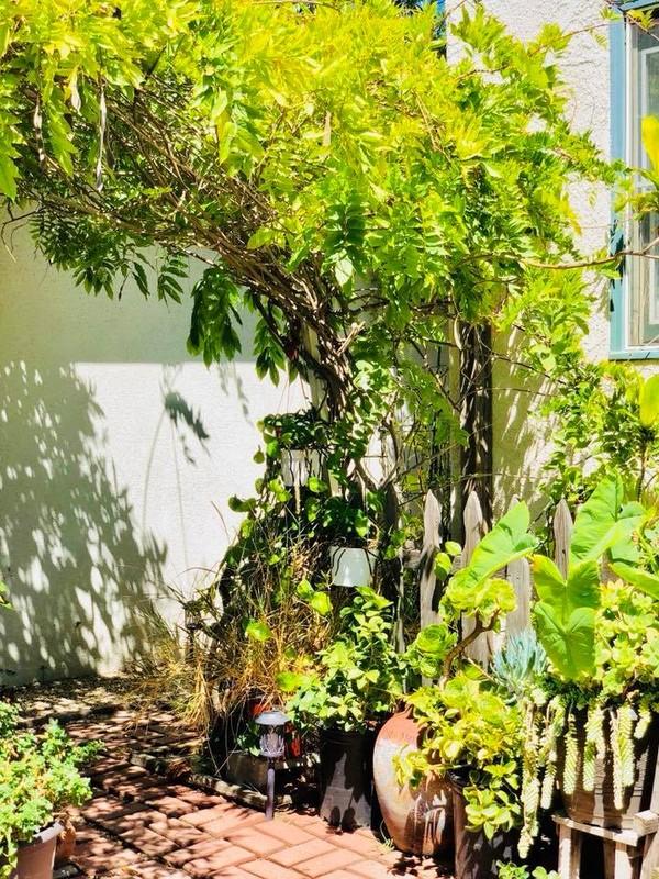 Chiem nguong khu vuon tran ngap cay xanh cua Thuy Nga-Hinh-4