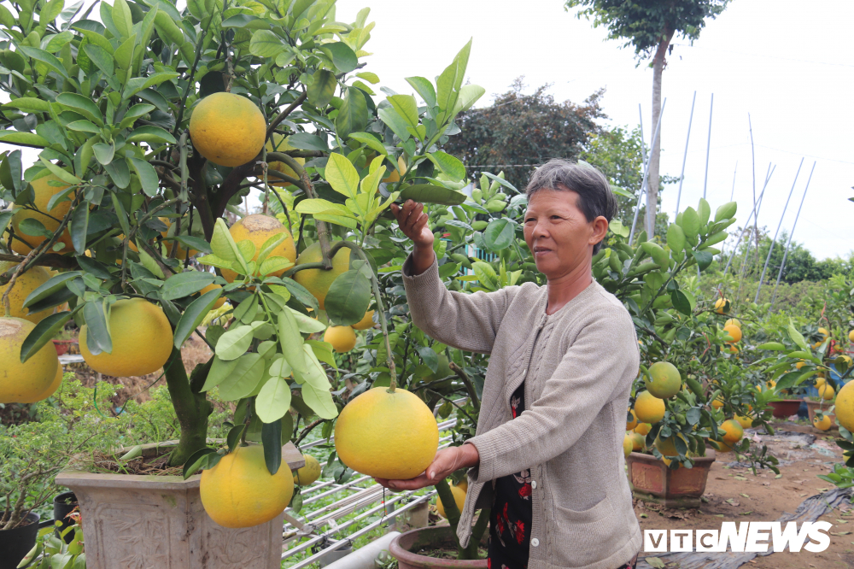 Dua buoi Dien mien Bac ve mien Tay choi Tet-Hinh-4