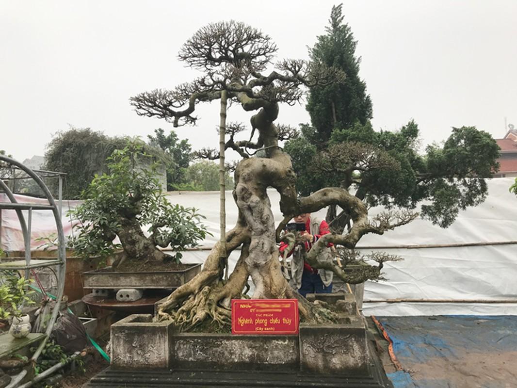 Vuon cay canh tien ty, khong muon ban cho ai cua dai gia Hung Yen-Hinh-11