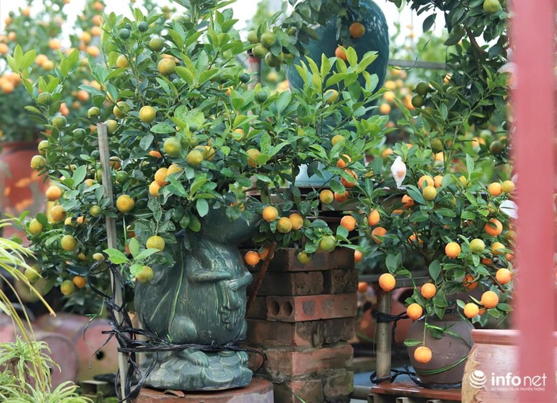 """Chuot cong quat bonsai"" gia ca trieu moi cay, hut khach dip Tet Canh Ty-Hinh-3"