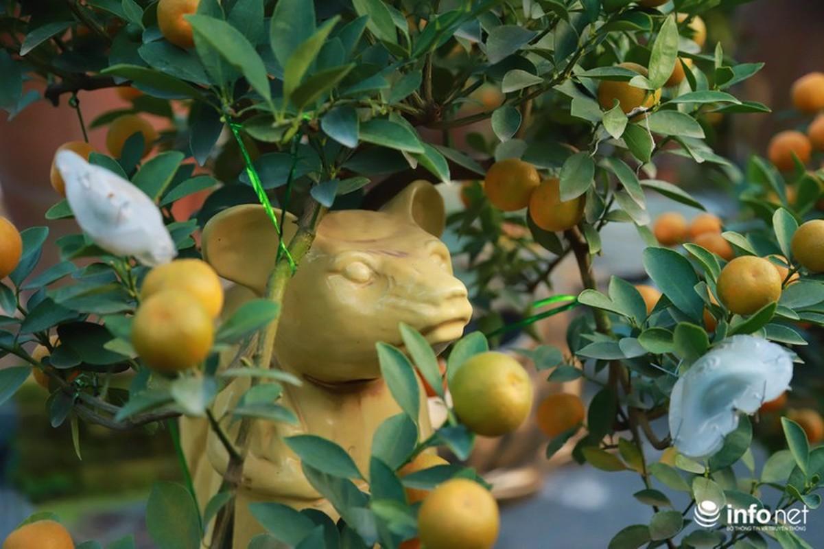 """Chuot cong quat bonsai"" gia ca trieu moi cay, hut khach dip Tet Canh Ty-Hinh-6"