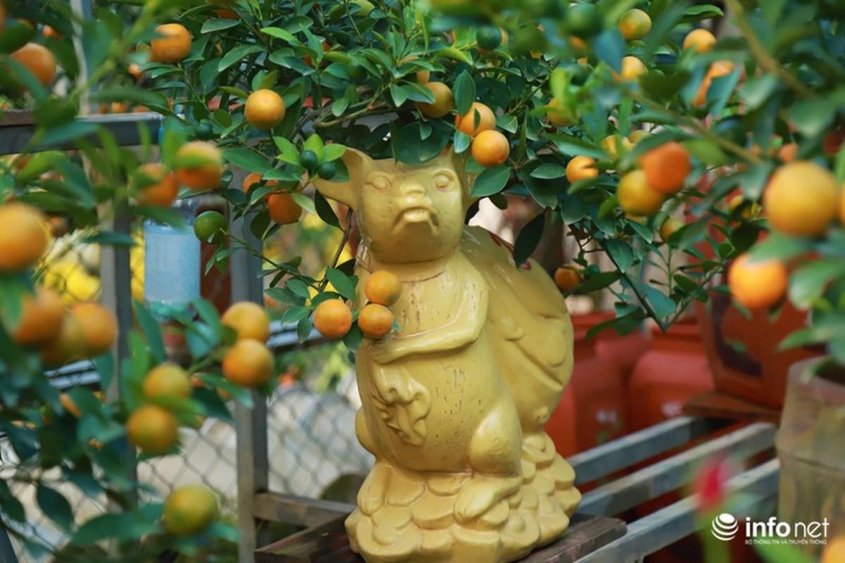 """Chuot cong quat bonsai"" gia ca trieu moi cay, hut khach dip Tet Canh Ty-Hinh-8"
