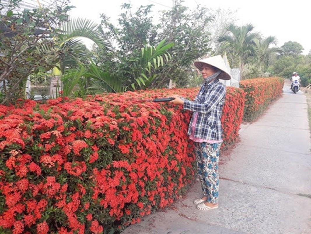 Nha cap 4 cua ong nong dan noi khap mang nho thu khong ai co-Hinh-7