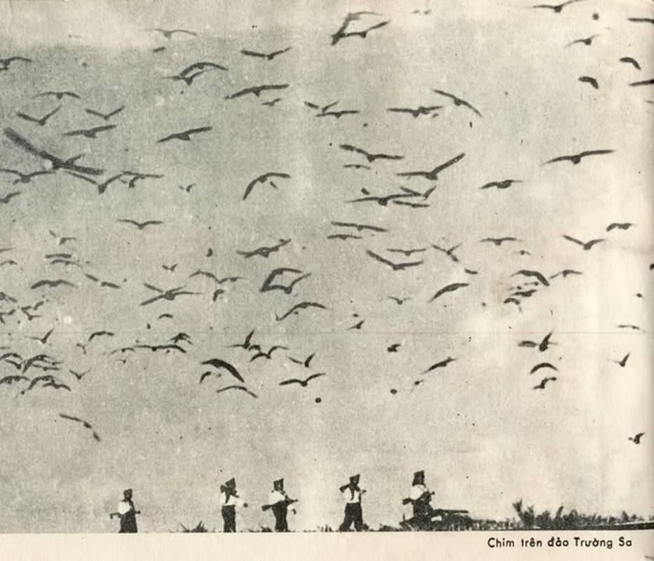 Hai quan Viet Nam giai phong hang loat hon dao trong chien dich Ho Chi Minh-Hinh-11