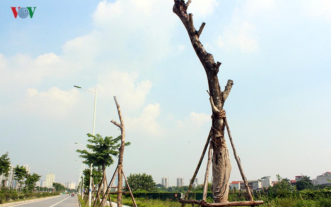 Anh: Bat thuong cay chet kho tren con duong 1.543 ty-Hinh-10