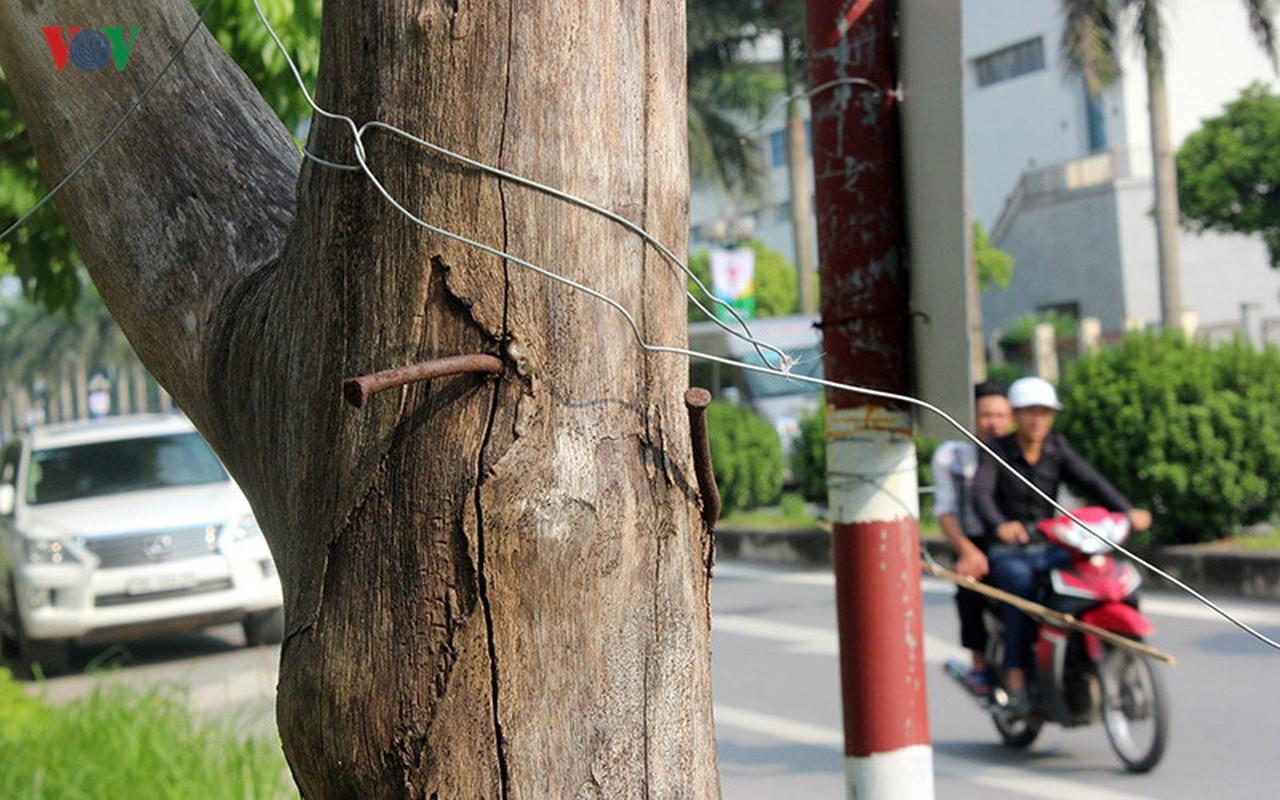 Anh: Bat thuong cay chet kho tren con duong 1.543 ty-Hinh-18