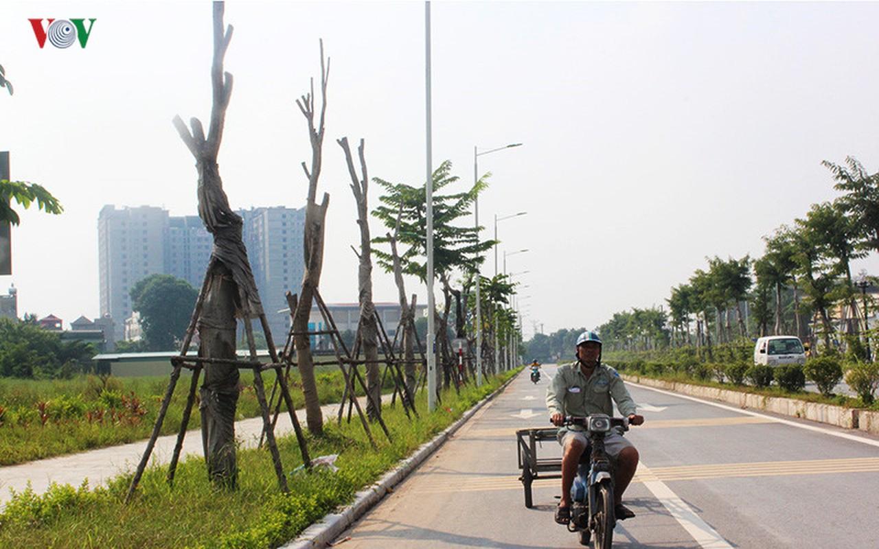 Anh: Bat thuong cay chet kho tren con duong 1.543 ty-Hinh-7