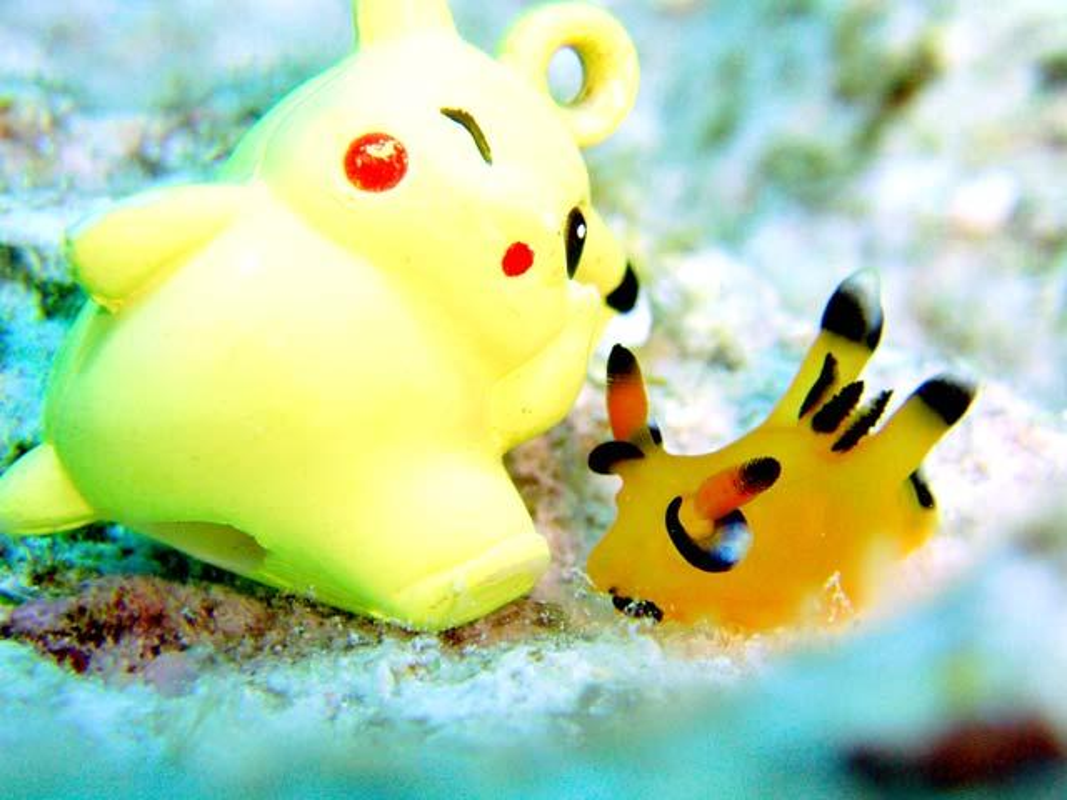 Ly ky cau chuyen ve sinh vat giong het Pikachu