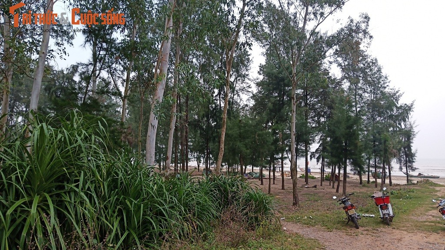 Can canh rung phong ho Quang Xuong bi tinh Thanh Hoa xoa so boi 1 van ban-Hinh-6