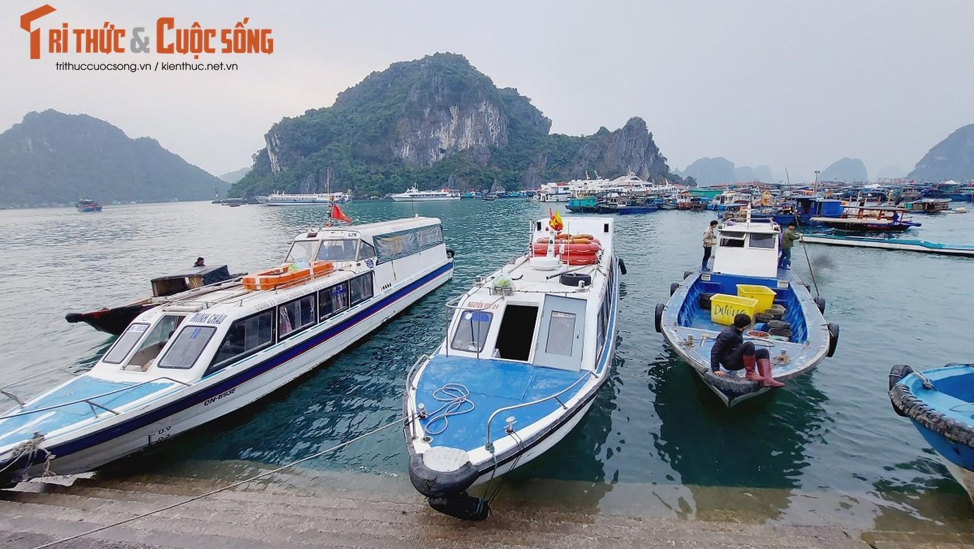 Quang Ninh: Ben cang diu hiu, tau thuyen nam im 1 cho mua COVID-19-Hinh-3