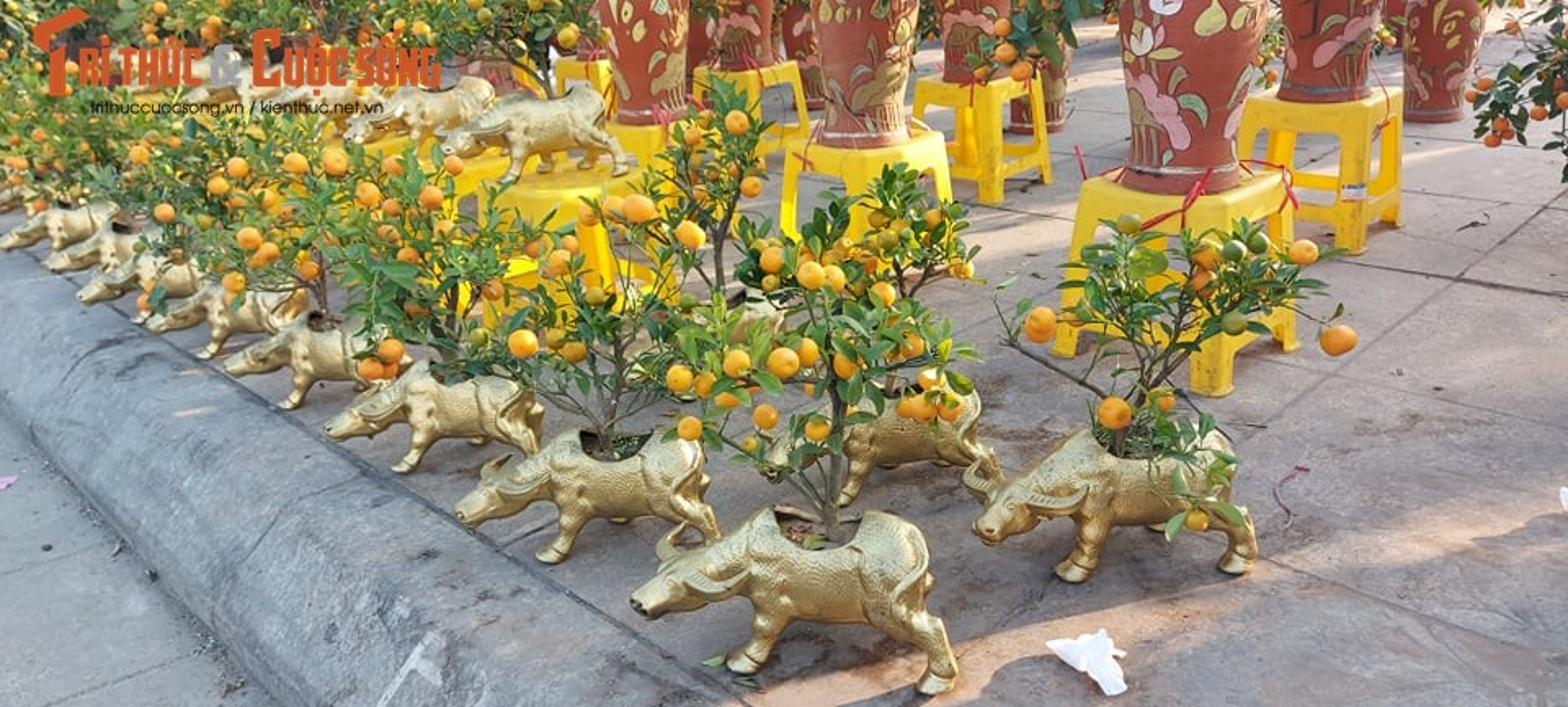 Nguoi dan Quang Ninh ngam hoa Xuan, tam quen met moi vi COVID-19-Hinh-10