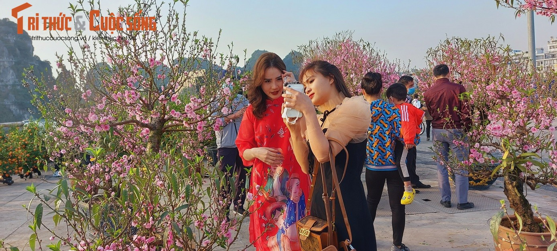 Nguoi dan Quang Ninh ngam hoa Xuan, tam quen met moi vi COVID-19-Hinh-7