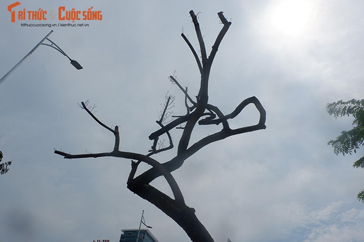 Hang sua tien ty o Ha Noi phai truyen dich de cuu van su song-Hinh-10
