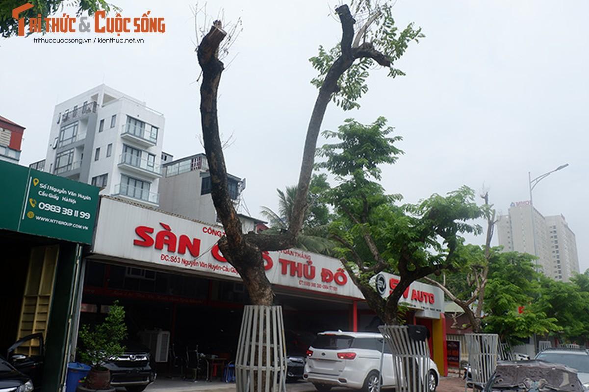 Hang sua tien ty o Ha Noi phai truyen dich de cuu van su song-Hinh-2