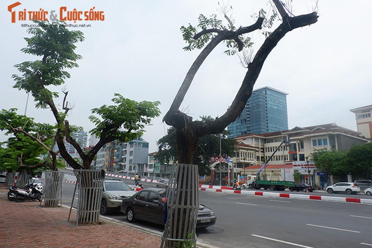 Hang sua tien ty o Ha Noi phai truyen dich de cuu van su song-Hinh-3