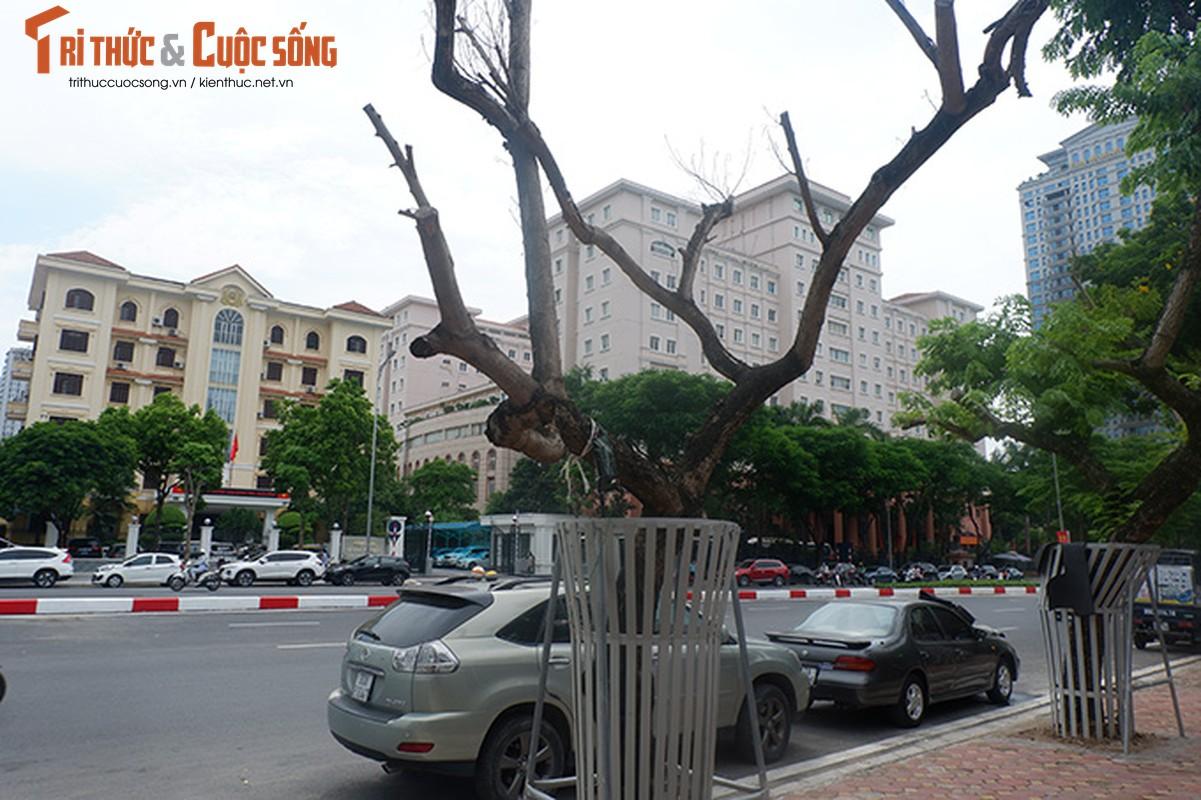 Hang sua tien ty o Ha Noi phai truyen dich de cuu van su song-Hinh-7