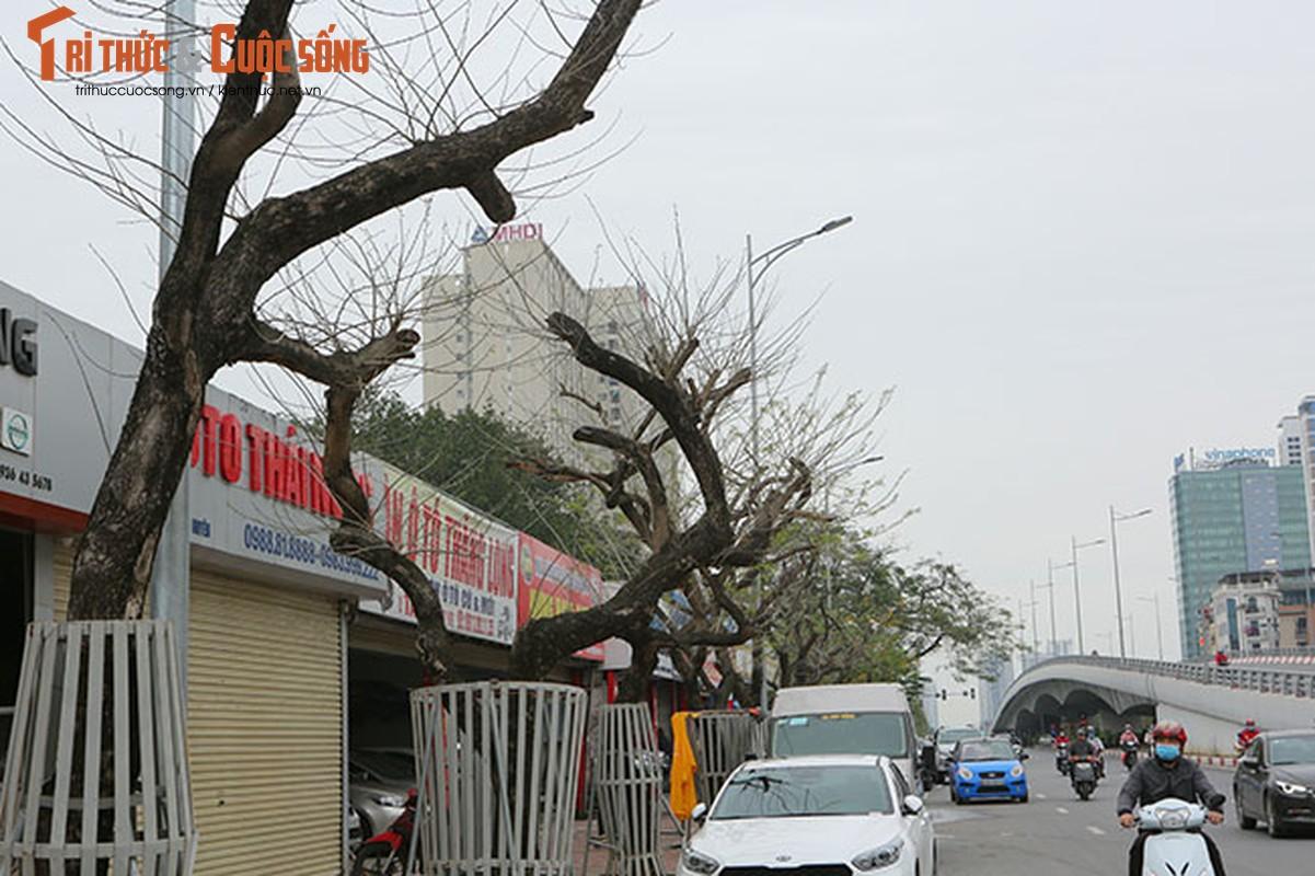 7 cay sua do o HN chet: Cty Thanh Cong Xanh co phai den tien ty?-Hinh-2