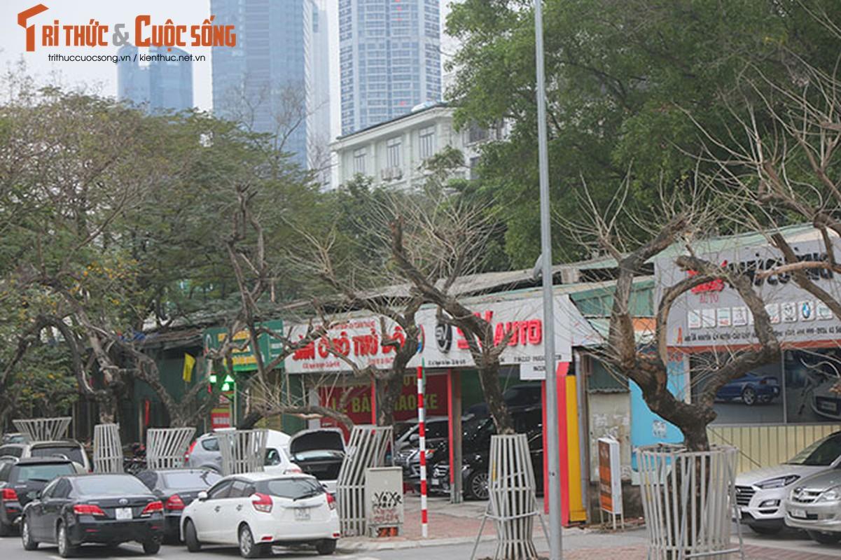 7 cay sua do o HN chet: Cty Thanh Cong Xanh co phai den tien ty?-Hinh-3