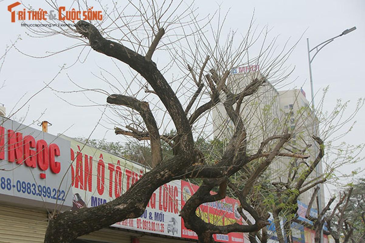 7 cay sua do o HN chet: Cty Thanh Cong Xanh co phai den tien ty?-Hinh-4