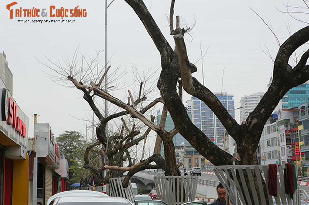 7 cay sua do o HN chet: Cty Thanh Cong Xanh co phai den tien ty?