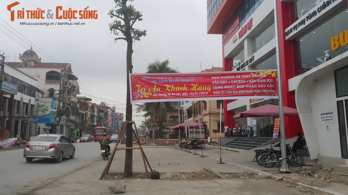 """Ky la hang cay xanh trong """"duoi long duong"""" o Uong Bi-Hinh-15"""