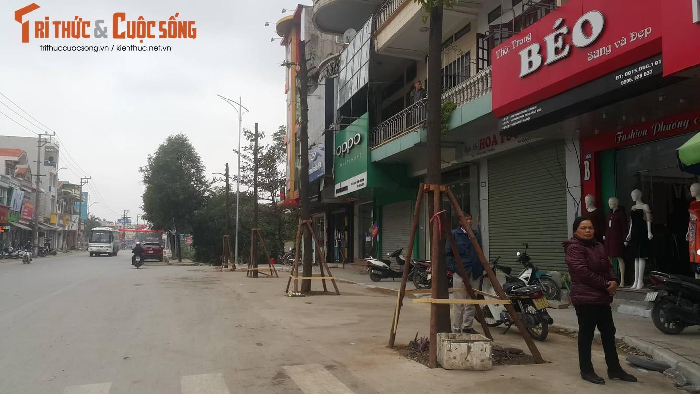 """Ky la hang cay xanh trong """"duoi long duong"""" o Uong Bi-Hinh-16"""